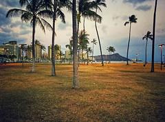 Twilight: Ala Moana Park (jcc55883) Tags: evening diamondhead skyline waikikiskyline alamoanaarea alamoanapark magicisland twilight palmtrees honolulu hawaii oahu ipad luckywelivehawaii sky clouds