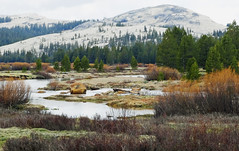 Tuolumne Meadow, Yosemite NP, CA 2015 (inkknife_2000 (9.5 million views)) Tags: easternsierranevada yosemitenationalpark california usa landscapes mountains snow snowonmountains dgrahamphoto creek mountainpond rocks waterreflections calmwater tuolumnemeadow spring granitedome forest meadowandstream