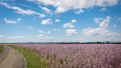 Plateau d'Entrevennes (Alpes de haute Provence) - France (pascal548) Tags: entrevenes alpesdehauteprovence france