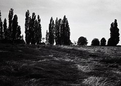 morning (OhDark30) Tags: carl zeiss jena czj werra 3 tessar 2850 35mm film monochrome bw blackandwhite bwfp fomapan 200 rodinal field shadow crop trees poplars morning