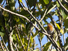 Robin (Don McDougall) Tags: channelislands guernsey islands don mcdougall donmcdougall robin bird birds avian