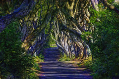 The Dark Hedges - Irlanda (Antonio-González) Tags: thedarkhedges irlanda juegodetronos bosque forest árbol carretera paisaje gameofthrones