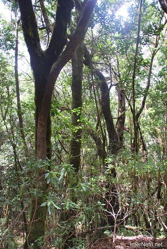 Національний парк Гарахонай, Гомера, Канарські острови  InterNetri  0724