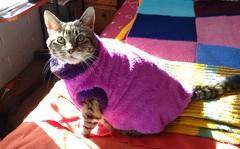 Xica de fuxia y morado [Explore] (angeliquita) Tags: gatos cats pets mascotas kitten atigrado tabby capita fuxia xica eyes motorolaxt1068