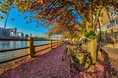 Long live the bike (miguel vanegas) Tags: bicicleta bici bike new york travel live love amor entrega constancia persigue sueños