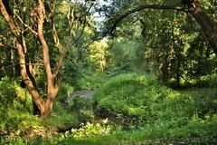 the Ochakovka River (vitalsimonovjb) Tags: moscow russia summer architecture landscape river nature forest