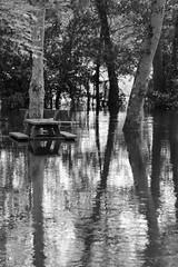 La fuie les pieds dans l'eau II (Tonton Gilles) Tags: alençon normandie epide école normale fuie des vignes inondations rivière sarthe reflets banc table de camping arbres paysage urbain noir et blanc