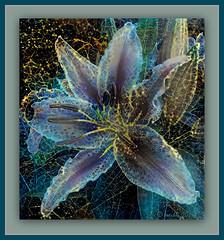 Starry night lily (boeckli) Tags: lilies lilien lily stars starry starrynight textures texturen textur texture ddg deepdreamgenerator photoborder rahmen blume blumen blüten bloom blossom blossoms blooms painterly