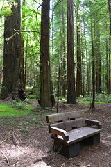 Avenue of the Giants (Jess (on a plane)) Tags: day4 avenueofthegiants redwoods redwoodsforest forest california usa 2018 holiday