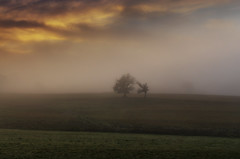 Solitude (thierrycolas19) Tags: aube matin campagne arbre pentax43limited douceur