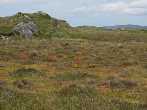 Sphagnum carpets Roundstone Bog
