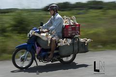 Duck + duck + duck = Market (Luynguyen +84 903 977 546) Tags: long an luynguyen nguyenthanhluy vịt duck vietnam treet