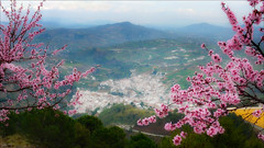 Tolox (kate willmer) Tags: blossom village tree mountain landscape andalucia tolox spain