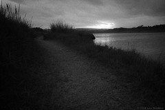 wetlands path  #855 (lynnb's snaps) Tags: 2018 35mm bw film leicaiiic leicafilmphotography barnack wetlands coast sydney australia evening sunset nature landscape pathwaystracks path grasses lake lagoon water lowlight moody pictorialism blackandwhite bianconegro bianconero blackwhite biancoenero blancoynegro noiretblanc schwarzweis monochrome ishootfilm rangefinder ©copyright2018lynnburdekin