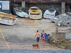Dog paddling (Couldn't Call It Unexpected) Tags: dog paddling sydney tinnies man woman