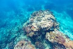Underwater Heron Island-28 (Quick Shot Photos) Tags: australia canon canoncollective greatbarrierreef heronisland queensland underwater bogie au