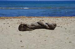 618 - Bastia au bord de la lagune, côté mer (paspog) Tags: bastia lagune corse corsica france mai may 2018 tronc driftwood