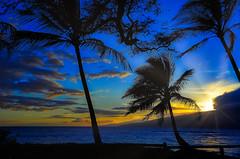 Rays (Kirt Edblom) Tags: maui mauihawaii kiheihawaii kihei beach serene seascape sunset sunlight sun pacific pacificocean gaylene wife palmtree palm palmtrees blue milf bluesky bluehour scenic silhouette sunrays water waterscape landscape kirt kirtedblom edblom easyhdr hdr luminar nikon nikond7100 nikkor18140mmf3556 clouds coast tree tropical ocean