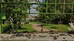 IMG_4112 (2) (kriD1973) Tags: europa europe italia italy italien italie lombardia lombardei lombardie milano milan mailand reptile rettile reptil lizard lucertola eidechse lezard animal animale tier rettili reptiles gelsomino jasminum jasmine reptilia