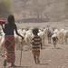 USAID_LAND_Ethiopia_2015-42.jpg