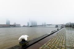 Misty Rotterdam VII (Alec Lux) Tags: rotterdam architecture atmosphere bridge canal city cityscape erasmus fog holland mist misty netherlands structure urban water