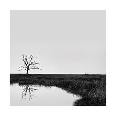 Just chillin (Nick green2012) Tags: square blackandwhite minimal reflection heron silence
