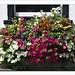 Floral Display (linda.addis) Tags: flickrlounge weeklytheme floralbeauty