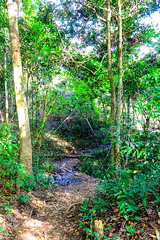 Footpath in garden jungle (www.icon0.com) Tags: jungle footpath garden path forest landscape nature park tree outdoor natural green environment plant walkway pathway walk way wood background foliage tropical wild travel road leaf wooden adventure asia track