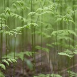 A Forest Of Ferns thumbnail
