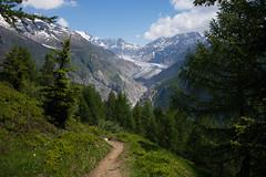 the best trail here... believe me. (Toni_V) Tags: m2408095 rangefinder digitalrangefinder messsucher leicam leica mp typ240 type240 35lux 35mmf14asphfle summiluxm hiking wanderung randonnée escursione jungfraualetsch unesco unescoworldheritage unescowelterbe landscape landschaft alps alpen grosseraletschgletscher trail wanderweg sentiero wallis valais oberwallis brigbelalpeggabrig belalp egga switzerland schweiz suisse svizzera svizra europe ©toniv 2018 180616