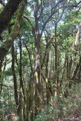 Національний парк Гарахонай, Гомера, Канарські острови  InterNetri  0717