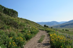Morning Walk (Patricia Henschen) Tags: crestedbuttecolorado brushcreek gunnisonnationalforest flowers flower wildflower wildflowers colorado crestedbutte mountain mountains pathscaminhos trail westelk range