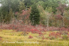 Pine Barrons (20) (Framemaker 2014) Tags: pine barrens wharton state park burlington county new jersey forest united states america