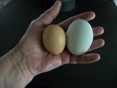 Ouch ! (geevee41) Tags: largeegg eggs blueegg summer prairies