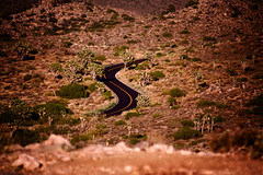 A Road Cutting Through The California Desert (El-Branden Brazil) Tags: america usa joshuatreenationalpark california desert road