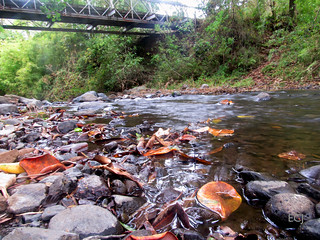 En el río hay aguas mansas/ In the river, there are waters of tranquility