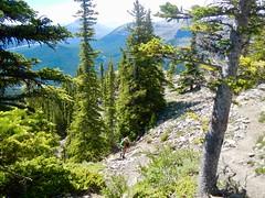 Nihahi Ridge Scramble - Ben plods forward (benlarhome) Tags: kananaskis alberta canada nihahiridge trail path hike scramble rockies rockymountain