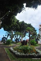 Ікод-де-лос-Вінос, Тенеріфе, Канарські острови  InterNetri  176