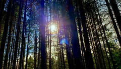 Afternoon Sun Through the Wetland Trees (rve13) Tags: wetland lake sun flare galaxys9 lookup