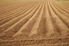 How Rich The Soil (Philipp Haegi) Tags: soil earth farming farmland field pentax pentaxks2