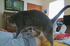 Millie 22 June 2018 9858Ri 4x6 (edgarandron - Busy!) Tags: millie graytabby cat cats kitty kitties tabby tabbies cute feline