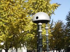 Gingko / 银杏树 (caitriana) Tags: beijing china ihep autumn