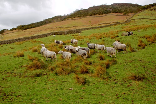 The Flock on the Hill