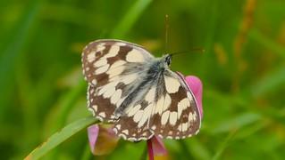 Butterfly - 5582