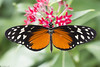 Butterfly 2018-48 (michaelramsdell1967) Tags: butterfly butterflies nature macro insect insects animal animals green red longwing beauty beautiful pretty lovely upclose closeup orange black vivid vibrant garden spring fragile delicate detail wing wings flower zen