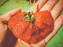 Retarded strawberry xD (D D photography) Tags: photo photos photography strawberry red juicy retarded retard defect sweet defective unusually unusual hand fingers palm summer hot seeds reddish green fruit fresh huge massive