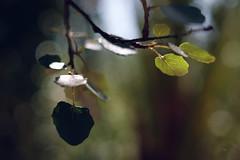 (Fernando Crego) Tags: abaran murcia nature huerta garden xt2 fujifilm 35mm summer verano