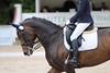 _MG_8164 (dreiwn) Tags: dressage pferd reitturnier turnierreiten pferdesport horse horseback horseriding equestrian reitverein dressurprüfung kandare doublebridle reiten pferde reitplatz ridingarena dressur dressuur