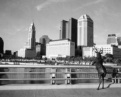 Downtown Columbus, Ohio (ryanungeronline) Tags: 120film 2017 fomapan200 ilfosol3 pentax67 bw bwnegative filmphotography