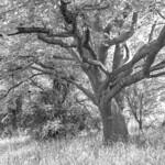 Under the Oak Tree thumbnail